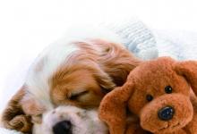 动物在梦中干些啥