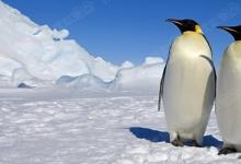 企鹅堆的秘密