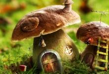 闻所未闻的蘑菇奇异用途