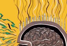 关于大脑的10个误区