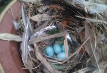 蛋壳里的奇妙世界