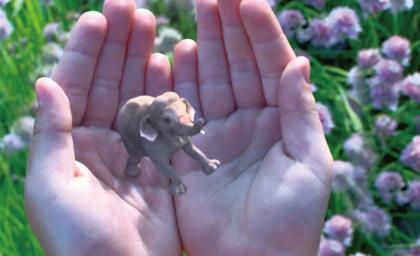 手心藏着一只大象.jpg