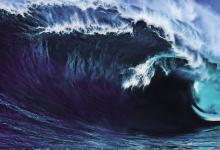 海上怪物:疯狗浪