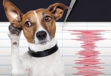 追踪动物,预测灾难