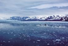 北极:未来的医药宝库