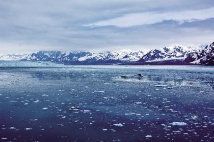 北极.jpg