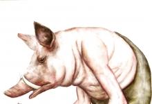 猪应该有人权吗?