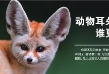 动物耳朵谁更强?