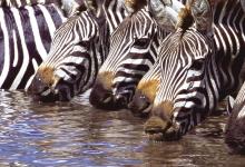 动物解渴妙招多