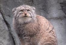 战斗力爆表的野生猫