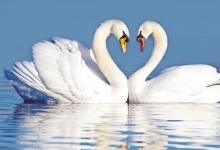 动物也有爱情长跑