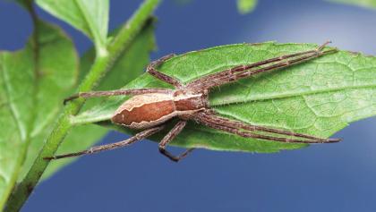 育儿网蜘蛛.jpg