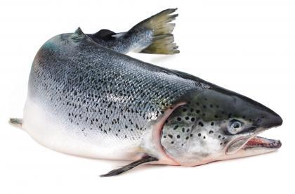 wild-salmon-rs.jpg