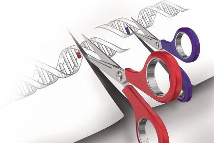 基因编辑题图2-1.jpg
