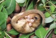人类对小动物冬眠知多少?