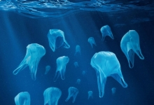 海洋中塑料垃圾去哪儿了