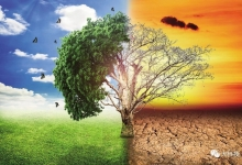 树木年轮:气候档案馆