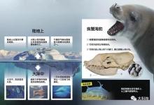 南极动物生存法则