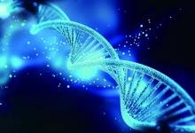 """基因在代代相传过程中也会""""作弊""""?"""