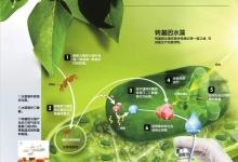 原生生物:水藻拥有超能力?