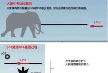 """是什么让多数大象免遭癌症""""毒手""""呢?"""
