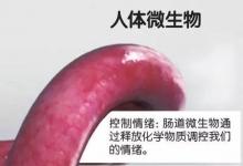你的心情好与坏,其实是由肠道微生物做主?