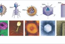 为什么人类对病毒越了解会越迷惑?