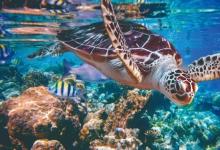 乌龟独特身体结构是怎么进化来的?