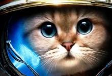 10种曾到过太空的小动物