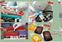 如何用自己的血救他人的命?