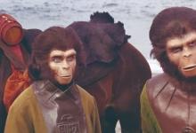 如果人类经历了物种大灭绝后劫后余生,还会进化吗?